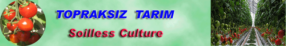 Topraksız Kültür Forum